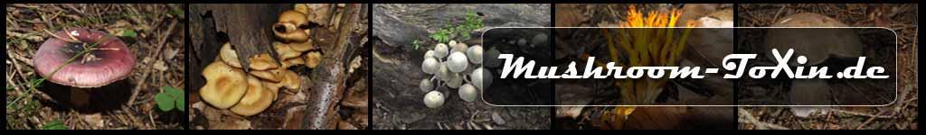 Pilze kennenlernen